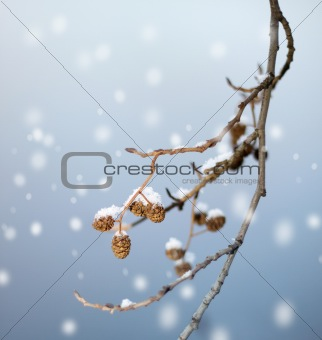 First snowfall branch