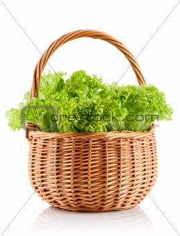 green leaves lettuce in the basket