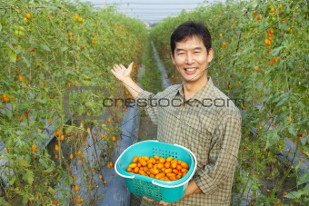 successful asian farmer holding tomato on his farm