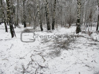 Forest after storm