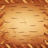 bark birch