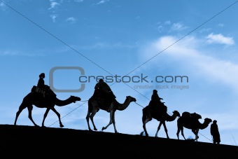 Silhouette of Camel Caravan in the Sahara Desert