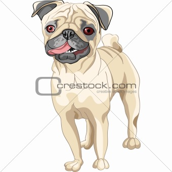 vector sketch dog smile fawn pug breed