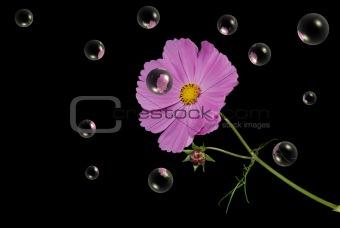 Cosmos Reflection