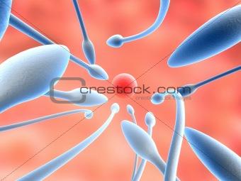 anatomy illustration: sperms and egg