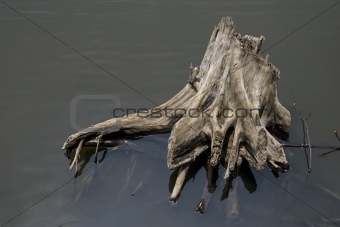 dead tree in swamp