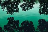 swamp trees and its reflection on the water