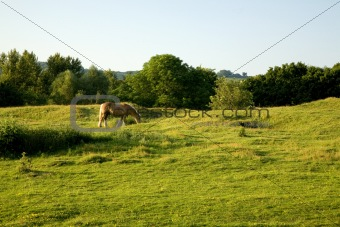 Beautiful Horse Grazing on Farmland