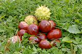 Chestnuts in grass