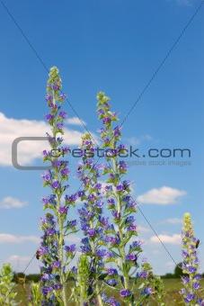 Group of flowering plants
