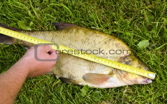 Measure fish bream Hand hold  tool big catch