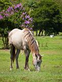 Beautiful horse feeding on grass