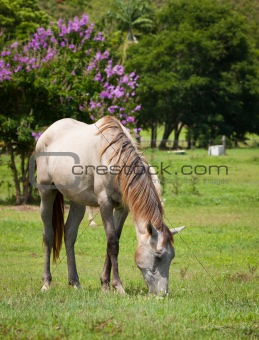 Beautiful horse feeding on grass
