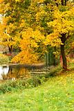 Autumn landscape with tree and pond