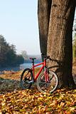 Red bike standing near a trunk large tree