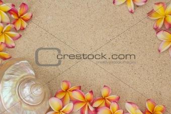 Frangipani flowers and a large sea shell on sand