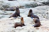 Sea Lion&#39;s life
