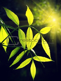 green foliage glowing in sunlight