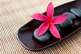 Tropical Plumeria Frangipani with spa stone on bamboo mat for sp