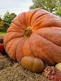 Giant Harvest Pumpkin