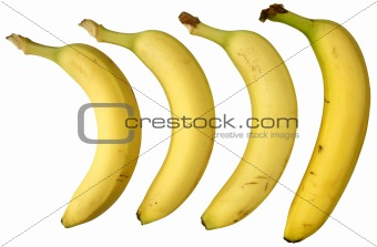 Four bananas isolated on white background.