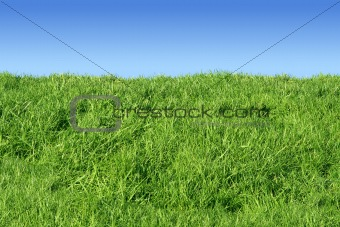 Green grass bank and a blue sky.