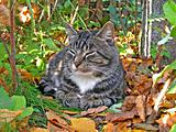 complacent cat amongst autumn herb