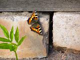 butterfly on concrete wall