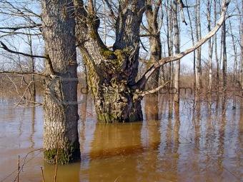flood in wood