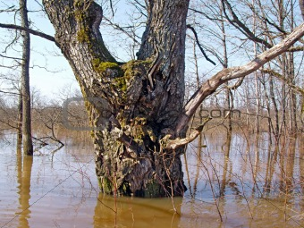 flood in wood