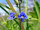 field flowerses