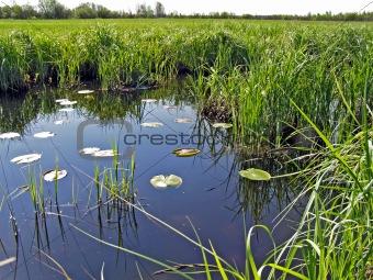 small lake amongst field