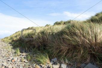 beale rocky beach sand dunes