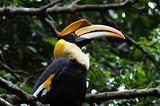 Great Hornbill sat on a perch