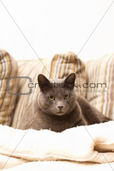 A cat sitting on a sofa looking straight