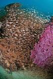 Milling fish