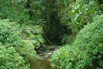 Bwindi Impenetrable Forest in Uganda