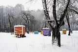 Hives cover snow colorful bee house winter tree