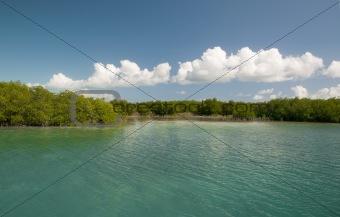 caro-largo mangrove