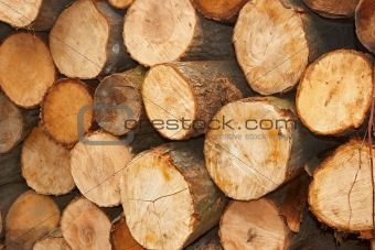 Sliced wooden logs