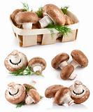 set fresh mushroom champignons with twig dill