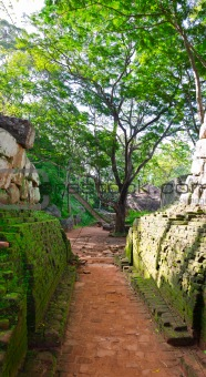 footpath in a park near mount Sigiriya, Sri Lanka (Ceylon).