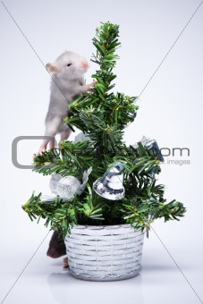 Gray mouse on toy tree