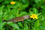 Lizard in green nature