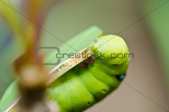 worm in green nature