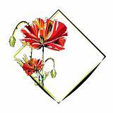 poppy frame