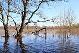 flood in old wood