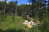garbage pit in wood