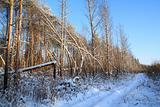 rural road in winter wood