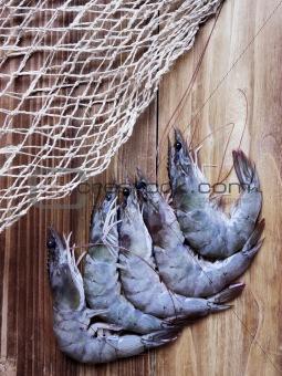 grey shrimps